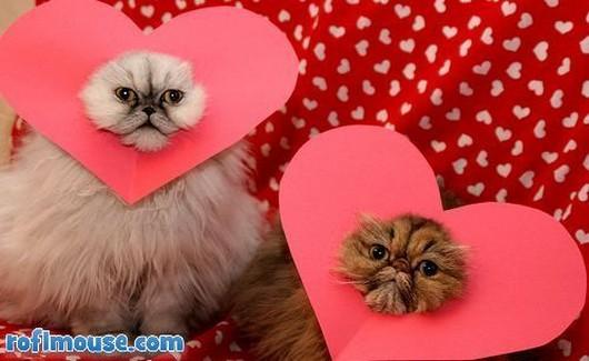 cf389_valentines-day-animals1